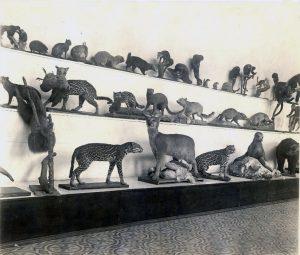 Museo de biología IPN. Década de los años 30.